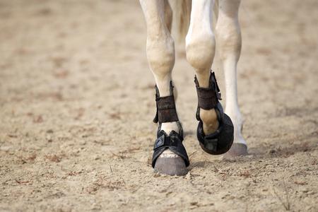 Cerca de las piernas de caballos con botas de tendón en el suelo de arena