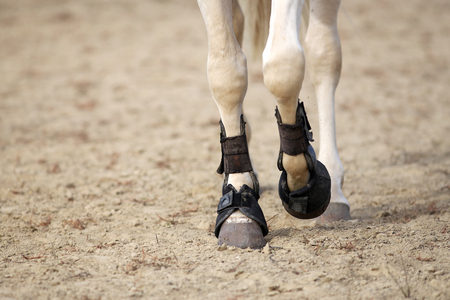 Close up of horse legs with tendon boots on the sandy ground