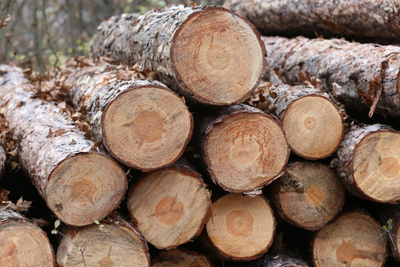 stack of firewood: Shot of freshly cut firewood logs in a stack