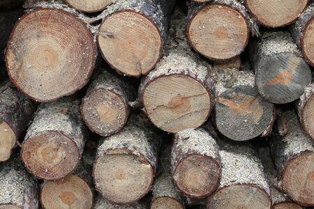 yard stick: Woodpile of freshly cut lumber awaiting distribution Stock Photo