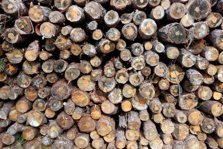 awaiting: Woodpile of freshly cut lumber awaiting distribution Stock Photo