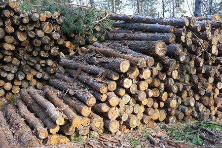 logging: Timber logging in autumn forest without people