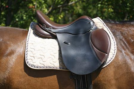 Back of saddled bay stallion on a training summertime
