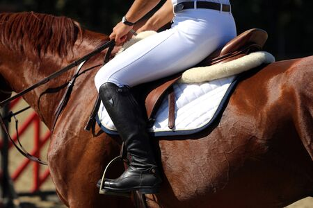 Purebred racehorse with beautiful trappings under saddle during training Standard-Bild