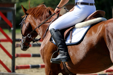 racehorse: Face of a purebred racehorse with beautiful trappings under saddle  during training Stock Photo