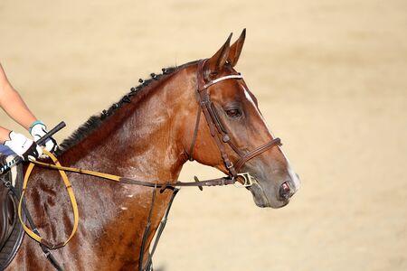 cabeza de caballo: Tiro en la cabeza de un caballo muestre el puente durante el entrenamiento con el jinete no identificado Foto de archivo