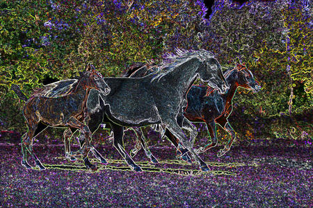 horse stable: Beautiful horses galloping across the field manipulated photo Stock Photo