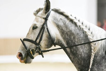 appealing: Braiding provides an aesthetically appealing look for a dressage horse