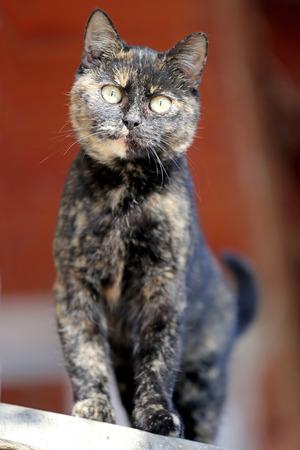 eyes green: Disparo en la cabeza de un gato atigrado con ojos verdes. Poca profundidad de campo