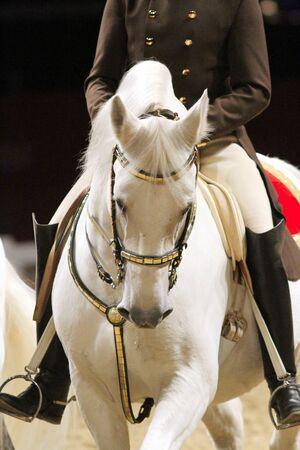 lipizzan horse: Unidentified rider in saddle of a show horse Stock Photo