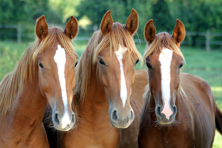 Three of horses in front of you looking face to face against corral fence summertime rural scene