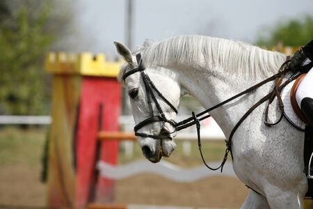 Closeup of show jumping horse during competition riding between obstacles Stock Photo
