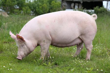 緑の草の牧草地農村動物農場のカメラのためにポーズの種をまく