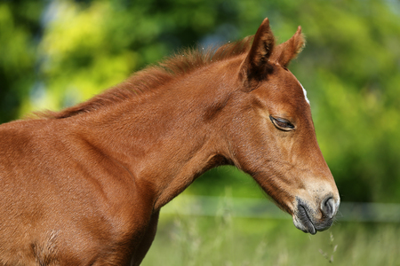 Very beautiful head shot of a newborn little horse Stock Photo