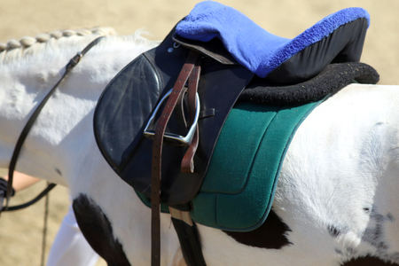 Sport horse standing  during competition under saddle outdoors
