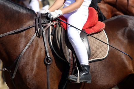 Sport horse close up with unknown rider under leather saddle on show jumping competition