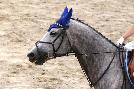 Sportpferdenahaufnahme auf Dressurwettbewerb. Pferdesport Hintergrund