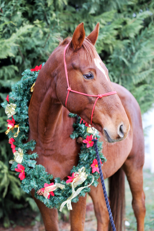 Portrait of a horse wearing beautiful garland