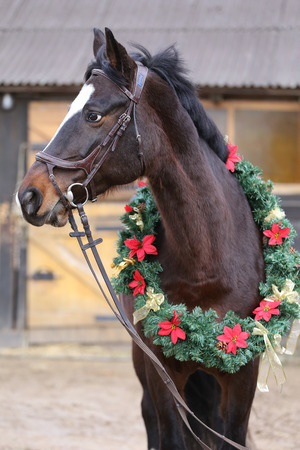 Dreamy image of asaddle horse wearing a beautiful christmas wreath at rural riding hall against barn door