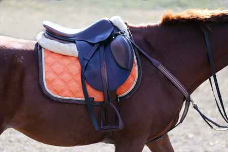 Photo of a beautiful leather sport saddle on equestrian competition
