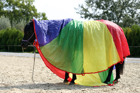 Side view photo of a young peaceful mare during training under a brand new colorful horse blanket