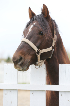 Young beautiful horse posing for cameras. Portrait of a purebred young horse at summer corral. Closeup of a young domestic horse on natural background outdoors rural scene