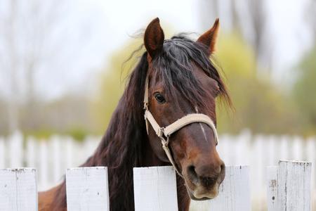 Jeune beau cheval posant pour les caméras. Portrait d'un jeune cheval de race pure au corral d'été. Gros plan d'un jeune cheval domestique sur fond naturel scène rurale à l'extérieur Banque d'images
