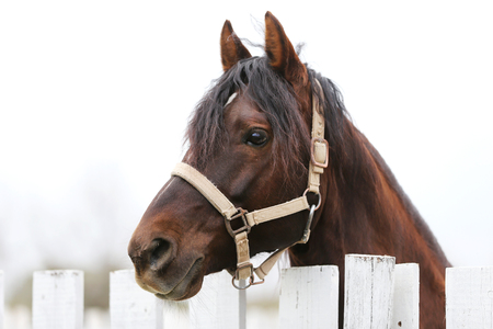 Young beautiful horse posing for cameras. Portrait of a purebred young horse at summer corral. Closeup of a young domestic horse on natural background outdoors rural scene Imagens