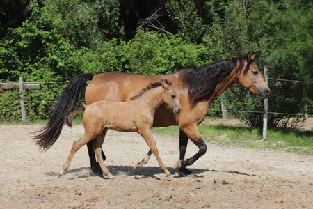 Beautiful newborn foal and mother enjoying sunshine in the paddock on hot summer day