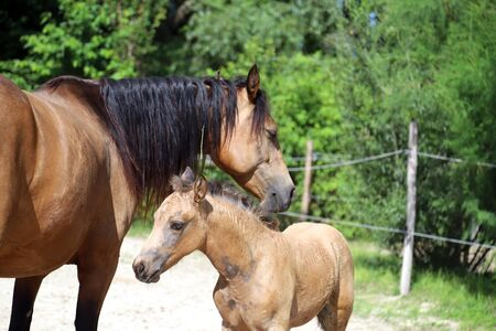 Beautiful newborn foal and mother enjoying sunshine in the paddock on hot summer day Standard-Bild - 127774509