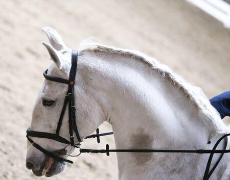 Unbekannter Teilnehmer reitet beim Dressurpferde-Event auf dem Reitplatz. Kopfschuss-Nahaufnahme eines Dressurpferdes während des Wettkampfereignisses Standard-Bild