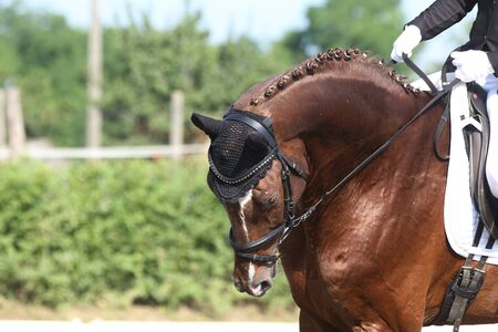 Unknown contestant rides at dressage horse event on riding ground indoors