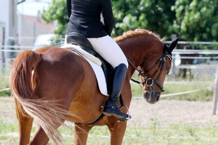 Unknown dressage rider sits on her stallion during race on natural background