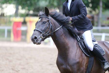 Porträt eines Sportpferdes während der Dressurprüfung unter dem Sattel. Schöne Dressurpferdeporträtnahaufnahme während des Wettbewerbs auf natürlichem Hintergrund im Sommer summer