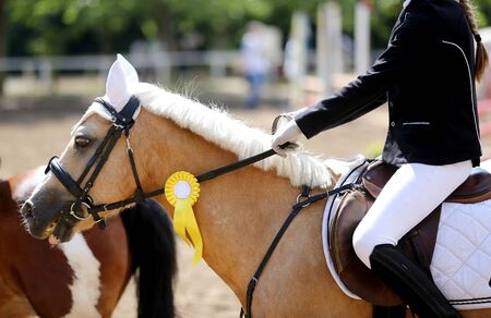 Purebred sport horse wearing winners trophy after competition