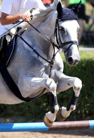 Kopf eines schönen jungen Sportpferdes auf der Rennbahn während des Springtrainings unter dem Sattel mit unbekanntem Reiter Standard-Bild