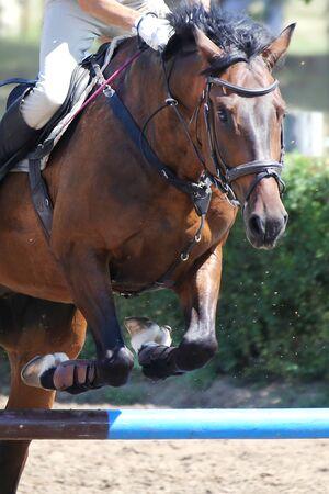 Springpferd und Reiter, die beim Springreiten springen. Selektiver Fokus