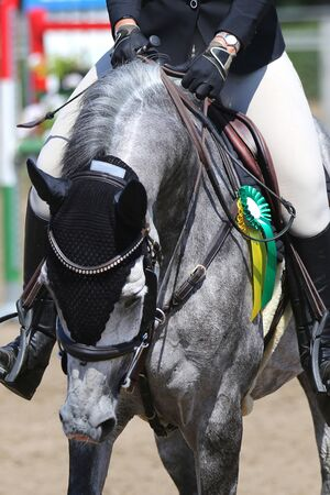 Head of a beautiful young sport horse at racecourse during show jumping celebration after the race