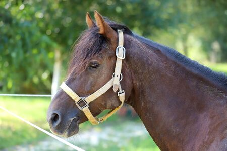 Young saddle horse posing against green natural background summertime. Head shot closeup of a purebred young horse. Closeup of a young domestic horse on natural background outdoors rural scene