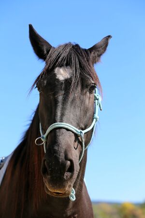 Portrait closeup of a sport horse during training. Beautiful saddle horse portrait closeup on trining on natural background at summertime