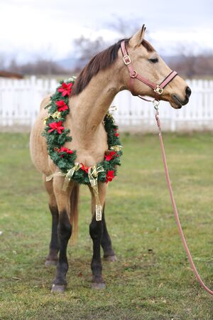 Dreamy christmas image of a saddle horse wearing beautiful holiday wreath