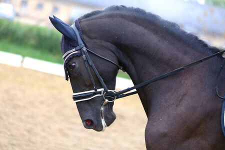Unknown contestant rides at dressage horse event in riding ground outdoors Standard-Bild