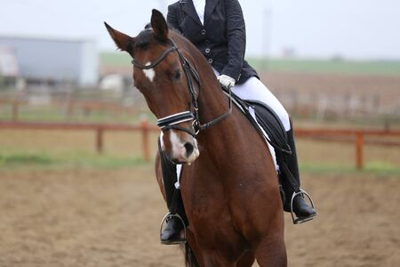 Unknown contestant rides at dressage horse event in riding ground outdoors