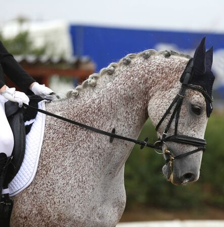 Unknown contestant rides at dressage horse event in riding ground outdoors Stockfoto