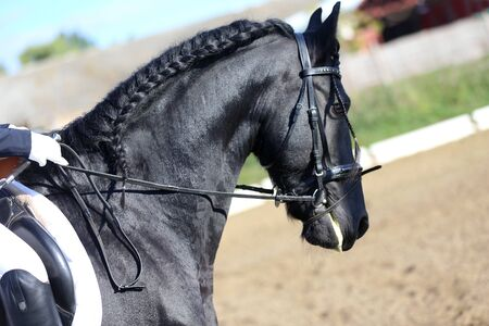 Head shot closeup of a dressage horse during ourdoor competition event Imagens