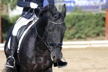 Head shot closeup of a dressage horse during ourdoor competition event Reklamní fotografie