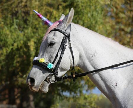 Beautiful magical unicorn horse realistic photography  스톡 콘텐츠