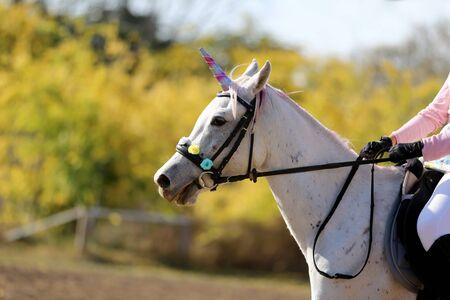 Beautiful magical unicorn horse realistic photography