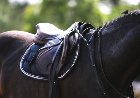 Closeup of a horseback under old leather jumper saddle on competition. Equestrian sport background.
