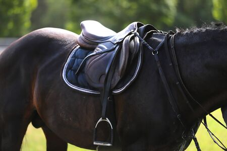 Equestrian sport background. Show jumper horse under saddle waiting for rider on equestrian event